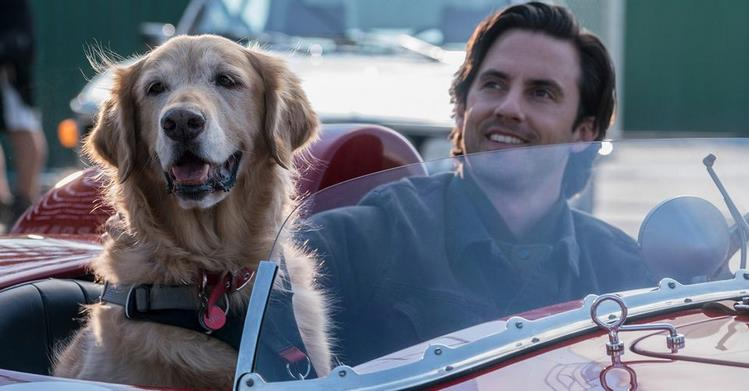 The Art of Racing in the Rain Review: The Zen of Marley & Me